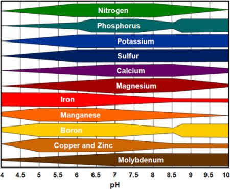 absorption of nutrients is not uniform with pH